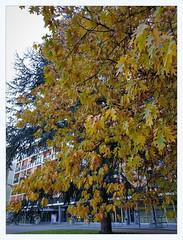 big tree (overthemoon) Tags: switzerland suisse schweiz svizzera romandie vaud lausanne eracom school college graphicarts windows park trees bauhaus 1955 ruedegenève flonvalley