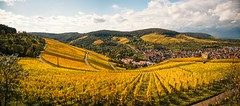 Autumn Panorama (DrQ_Emilian) Tags: landscape view vineyards hills town rural countryside ruin sky clouds fall autumn season colors details light mood wanderlust travel visit explore discover yburg stetten kernen remstal badenwürttemberg germany photography hobby outdoors nature panorama gold yellow idillyc