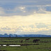 Hiddensee (bernstrid) Tags: hiddensee kloster mv wolken wiese pferde explore explorer