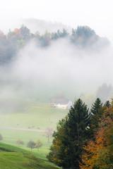 Fog in Zürcher Oberland (Diueine) Tags: sp 150600mm f563 di vc usd g2 tamron nikon nikkor d850 wald oberland zürich switzerland schweiz fog nebel