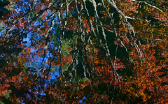 Rippling Waters (davidwilliamreed) Tags: reflection water tree vivid color nature gibbsgardens ballgroundga cherokeecounty abstract