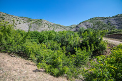 Habitat of Tarucus balkanicus (Charaxes14) Tags: lighting shadow green beautiful wonderful amazing beauty nature bokeh fantastic sunny summer landscape view scenery wide widefield sky blue mountains mountainside hill hills pine forest meadow field mountain trail north macedonia