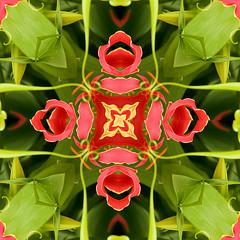 Gloriosa_Kaleidoskop (Eerika Schulz) Tags: gloriosa rotschildiana kaleidoskop eerika schulz