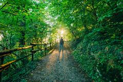 Forest (Nicola Pezzoli) Tags: italy italia lombardia val seriana bergamo leffe gandino nature natura foresta peia man sun flare sole green light luce