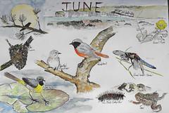 Wildlife Sketch, June 2019, P9 (marilyndewar458) Tags: wildlife sketch watercolour penandwash