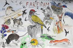 Wildlife Sketch, Fareham Holiday, Summer 2019, P9 (marilyndewar458) Tags: wildlife sketch watercolour penandwash