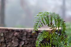 Short After The Rain (Role Bigler) Tags: emmental farn fern fujifilmxt2 fujinonxf1855mm1284rlmois herbst natur autumn fall farnblatt forest fujinon1855ois nature schweiz suisse switzerland wald wood