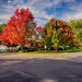 Autumn Color on Display in Morris