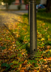 Herbst (Rene_1985) Tags: leica m9p 50mm summicron 20 v herbst fall leaves blätter bokeh ourdoor