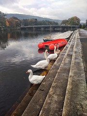 Photo of River Wharfe at Otley