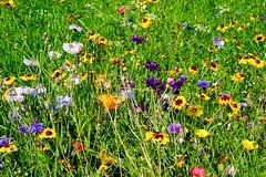 Photo of Wildflowers