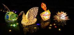 Lighting up Limekiln Lock for Diwali (Brian Negus) Tags: illumination floating happydiwali diwali waterlily reflection leicestershire canalrivertrust light canal celebration swan night fish floatinglights diwalilamp leicester likekilnlock