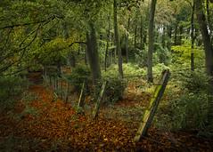 Lean on me (joolst14) Tags: autumn autumnak northumberland northtynevalley trees nikonuk