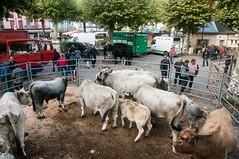 Seix (Ariège) (PierreG_09) Tags: seix ariège pyrénées pirineos couserans occitanie midipyrénées foire marché faune mouton brebis agneau