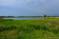 Boerveense plassen (Nelleke C) Tags: 2019 boerveenseplassen oudediep beek beekdal berghuislook drenthe heathland heide landscape landschap nederland netherlands stream