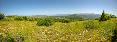 Karadžica Mountain (Charaxes14) Tags: lighting shadow green beautiful wonderful amazing beauty nature bokeh fantastic sunny summer landscape view scenery wide widefield sky blue mountains mountainside hill hills pine forest meadow field mountain trail north macedonia