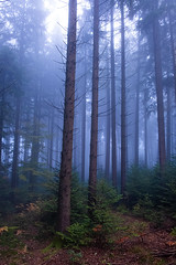 Misty Forest (Role Bigler) Tags: baum emmental herbst mist natur nebel tree autumn buefog fall fog foggy forest herbstlaub misty nature schweiz suisse svizzera switzerland wald wood