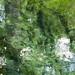 Ichetucknee Springs