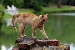 grace (Сonstantine) Tags: catslife grace animals