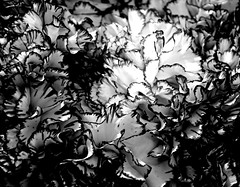 Flowers (pjpink) Tags: vmfa virginiamuseumoffinearts virginiamuseum museum art rva richmond virginia may 2019 spring pjpink 2catswithcameras blackandwhite bw monochrome uncolored colorless