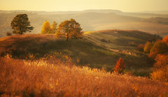 gentle light of an autumn evening (proffkom_) Tags: light manual vintage m42 pentacon meyer optik gorlitz orestor 135mm f28 15petals colors autumn bukovina ukraine