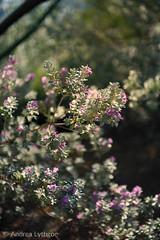 St George Desert Garden-3 (shutterdoula) Tags: desert plants cacti utah