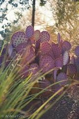 St George Desert Garden-2 (shutterdoula) Tags: desert plants cacti utah