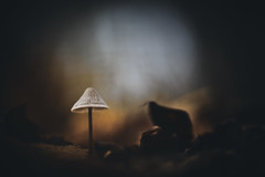 Funghi (micke.vmix) Tags: carlzeiss zeiss aposonnart2135 sonnar135f2zf d850 mushroom