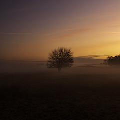 Morning mood (Gergő Kardos) Tags: nikon haidafilters silence nopeople calm amazing colorful tree nature foggy morning sunrise