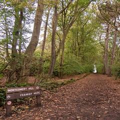 Autumn Royden Park #roydenpark #wirral #countryside #nature #merseyside #liverpool #autumn #nikon #d740 #nikond750 (matthewgray1983) Tags: roydenpark wirral countryside nature merseyside liverpool autumn