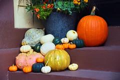 Decorative Squash! (WilliamND4) Tags: hss sliderssunday squash autumn pumpkin