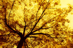 Es bueno ser una Oveja Negra...yo lo soy. (Elena m.d. 12.7M views.) Tags: new autumn 2019 yelow colors nature landscape nikon d5600 tokina 1116 fabuleuse