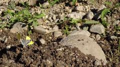 Polillas-Avispa-Hormiga; Moths-Wasp-Ant (Matí Matias) Tags: