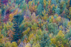 Autumn Art (CoolMcFlash) Tags: autumn trees colors fujifilm xt2 aerial herbst herbstlich farben bäume wood forest wald bunt fotografie photography natur nature xf18135mmf3556r lm ois wr bestefreundeumhalbdrei
