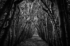 Foto (teun_van_dijk) Tags: 08 nature tree trees branches blackandwhite bw teunvandijk lane curling composition