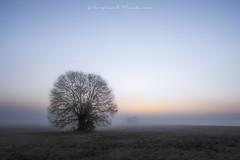 It's a beautiful day (Bertrand Thiéfaine) Tags: arbre poumon nu leverdujour aurore ciel bellejournée itsabeautifulday respire air bleu