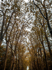 Aisle... (gabriel.gallozzi) Tags: aisle allée couleurs colors chenonceau france château tree entrée centre ceu