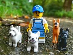 Dog walker (sander_sloots) Tags: dogs dog walker weizigt park dordrecht dctz90 panasonic lumix weizigtpark honden uitlaten uitlaatster minifig series minifiguur lego toy photography afol