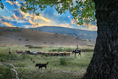 Traditional pasturage (Dimitil) Tags: autumn colors animals clouds action cloudysky county dog countryside couple country flock donkey foliage dramaticsky domesticanimals environs countrylive d4 countryard landscape hellas greece greenery grassland grazing graze herbage herder greektradition herdsman grazier frameinframe likeoldtimes freegrazing people nature pasture rays prairie pastoral plain pasturage pastoralism pastoralscene nikond4 pastorallife pasturland sunset sky rural shepherd sunrays sheeps rurallife ruralscenes sunsetcolors stockyard ruralscene thessaly shepherddog sheeptender thessalicplain village valley vegetation tradition troop villagelife trikala traditionallife traditionaljobs fabuleuse