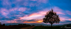 Sonnenuntergang Hägglingen (Andreas Stamm) Tags: sonnenuntergang hägglingen schweiz swiss aargau baum tree wolken clouds sunset