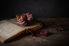 20/31: There is simply the rose; it is perfect in every moment of its existence...Ralph Waldo Emerson (judi may) Tags: october2019amonthin31pictures lowkey lowlight book rose vintage petals stilllife tabletopphotography canon5d 50mm sliderssunday dof depthoffield