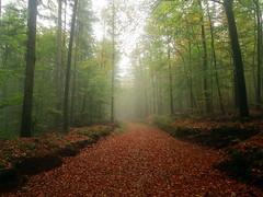 Sunday Walk - Sonntagsspaziergang (anne.w.51) Tags: pfälzerwald breathtaking landscapes