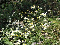 DSCN0358 (Gianluigi Roda / Photographer) Tags: summer august 2013 apennines appenninomodenese flora lagodellaninfa