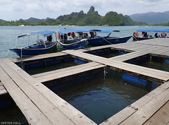 Fish Farm (peterphotographic) Tags: p7310570edwm kilimkarstgeoforestpark olympus tough tg5 ©peterhall langkawi malaysia seasia asia water river fishfarm geo forest naturereserve dock pier planks fish farm boat motorboat
