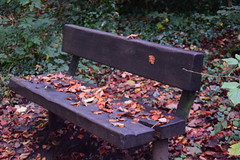 2448 (Tony Gillon) Tags: autumn2019 autumn october october2019 greatermanchester peakforestcanal