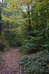 2447 (Tony Gillon) Tags: autumn2019 autumn october october2019 greatermanchester peakforestcanal