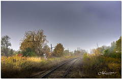 OCTOBER 2019 _983_NGM_3983-1-222 (Nick and Karen Munroe) Tags: fog foggy mist misty fogpatches goldenhour goldensunset goldenlight gold orange yellow cool flora november outside landscape landscapes dawn sunrise morning daybreak traintracks train tracks cnr canadian national fall autumn fallsplendor fallcolours karenick23 karenick karenandnickmunroe karenandnick munroe karenmunroe karen nickandkaren nickandkarenmunroe nick nickmunroe munroenick munroedesigns photography munroephotoghrpahy munroedesignsphotography nature brampton bramptonontario ontario ontariocanada outdoors canada d750 nikond750 nikon nikon2470f28 2470 2470f28 nikon2470 nikonf28 f28 colour colours color colors