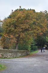 2408 (Tony Gillon) Tags: autumn2019 autumn october october2019 greatermanchester peakforestcanal