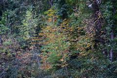 2411 (Tony Gillon) Tags: autumn2019 autumn october october2019 greatermanchester peakforestcanal