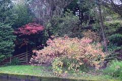 2415 (Tony Gillon) Tags: autumn2019 autumn october october2019 greatermanchester peakforestcanal